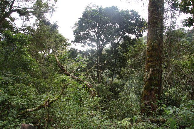 La Amistad International Park, Bocas del Toro Province, Panama