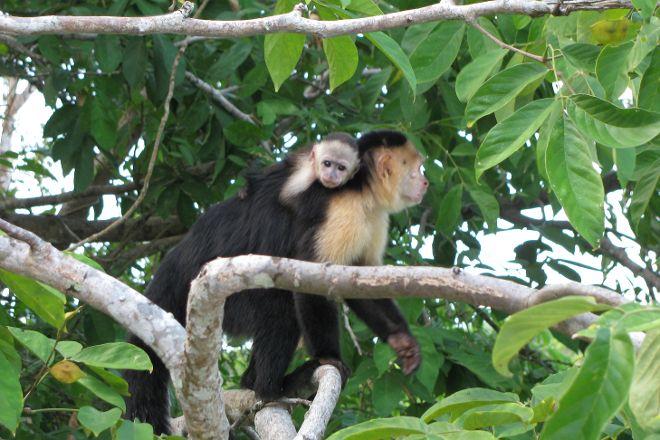 Monkey Island, Panama City, Panama