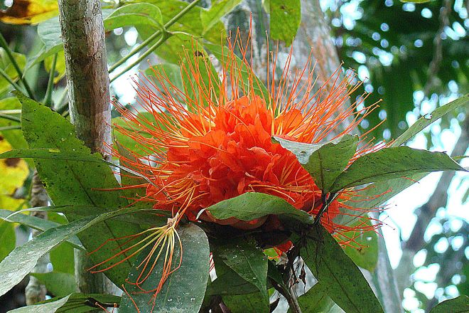 Summit Botanical Gardens, Panama City, Panama
