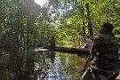 Amazon Golden Snake