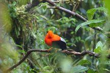 Amazon Wildlife Peru
