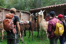 Llama Pack - Day Tours, Urubamba, Peru