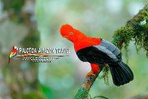 Palotoa Amazon Travel