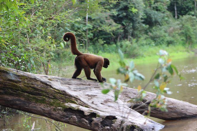Amazon Discovery, Iquitos, Peru
