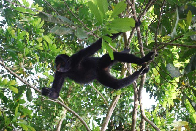 Monkey Island, Puerto Maldonado, Peru