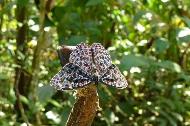 Pilpintuwasi Butterfly Farm, Iquitos, Peru