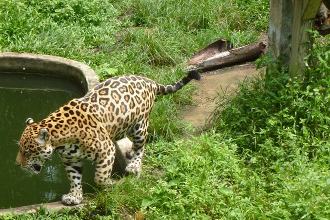 Quistococha Zoo, Iquitos, Peru