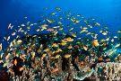 Tropical Divers Dive Center