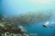 Fisheye Divers