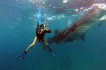 KI Marine Dive and Tours, Mactan Island, Philippines