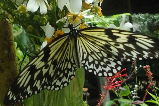Can-olin Butterfly Sanctuary, Candijay, Philippines