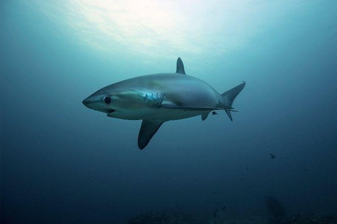 Evolution Diving, Malapascua Island, Philippines