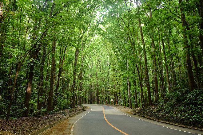 Mahogany Forest, Loboc, Philippines