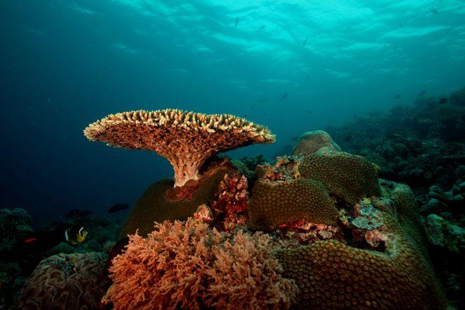Tubbataha Reef, Puerto Princesa, Philippines