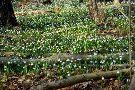 Sniezycowy Jar Reserve