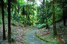 Jose do Canto Forest Garden