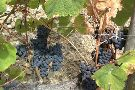 Quinta de la Rosa Winery