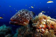 Best Spot Azores Dive Center