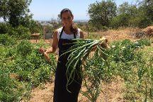 Taste Algarve - Day Lessons, Tavira, Portugal