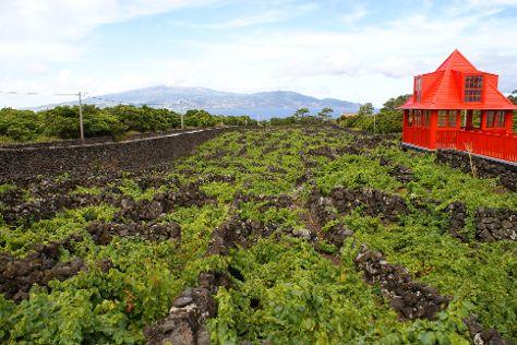 Trilha de Vinhas, Criacao Velha, Portugal