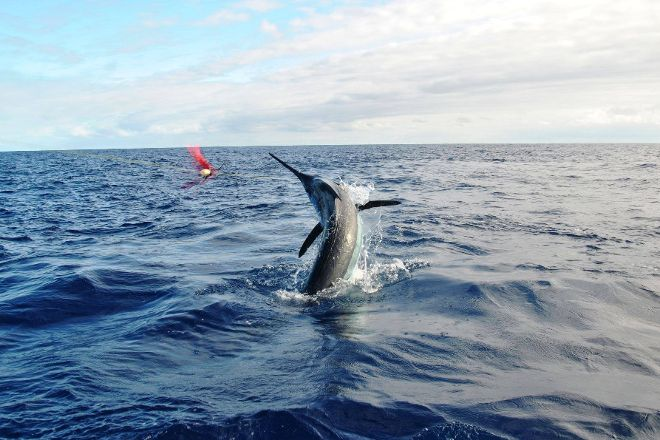 Alabote Sport Fishing Charter's, Ponta Delgada, Portugal