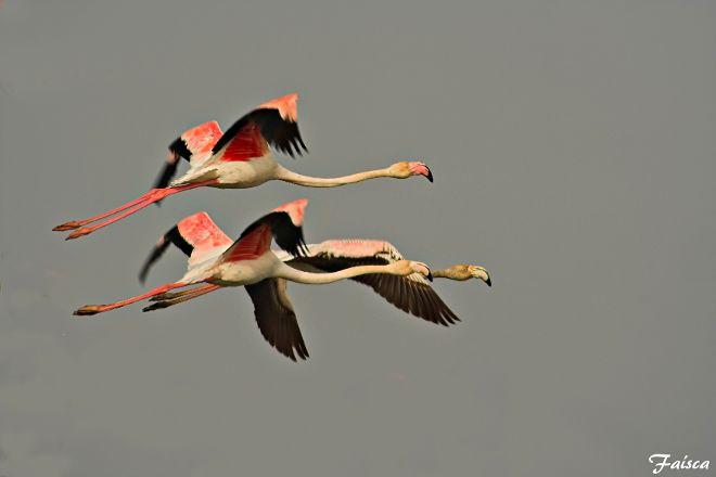 Birds & Nature Tours, Lisbon, Portugal