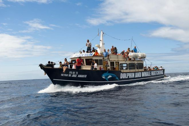 MobyDick Tours - Whales & Dolphins Watching, Ponta Delgada, Portugal