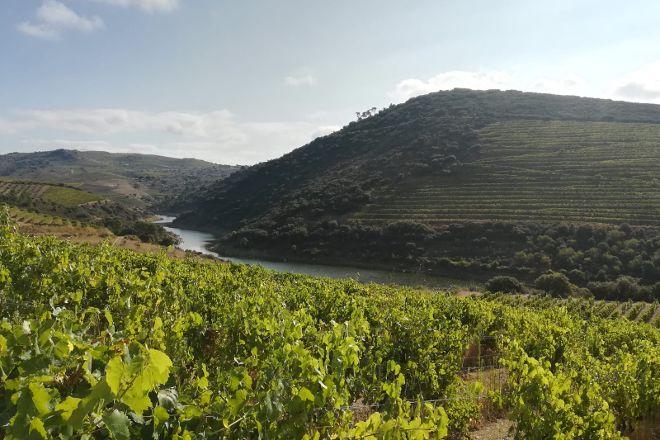 Pocas Vinhos, Vila Nova de Gaia, Portugal