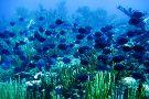 Paradise Scuba & Snorkeling Center