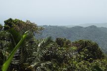Rainforest Zipline Park
