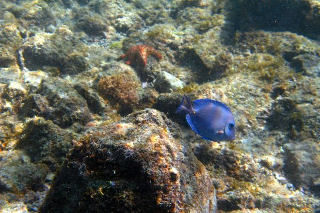 Abe's Snorkeling and BioBay Tours, Isla de Vieques, Puerto Rico