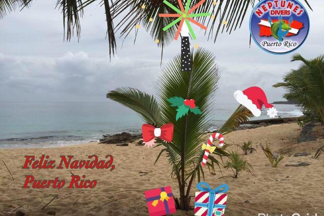 Neptunes Divers PR, Manati, Puerto Rico