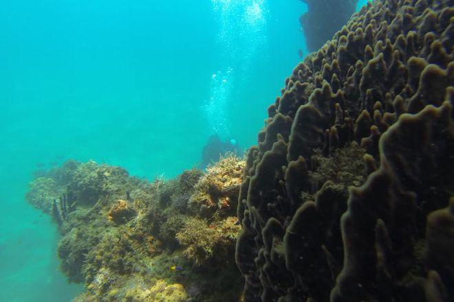 PR Dive, Bayamon, Puerto Rico
