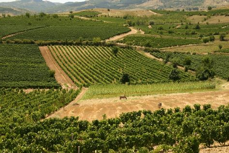 Tikves Winery, Kavadarci, Republic of North Macedonia