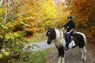Icelandic Horses Riding Ranch