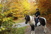 Icelandic Horses Riding Ranch, Izvoare, Romania