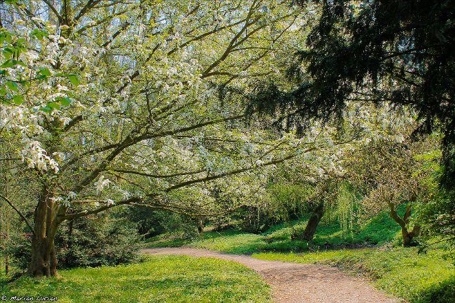 Arboretumul Simeria, Simeria, Romania