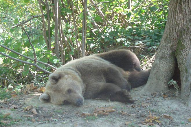 Libearty Bear Sanctuary Zarnesti, Zarnesti, Romania