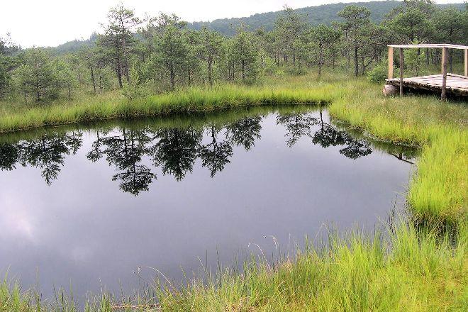 Mohos Peat-Bog, Romania