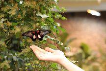 Tropical Butterflies Garden Mindo, St. Petersburg, Russia