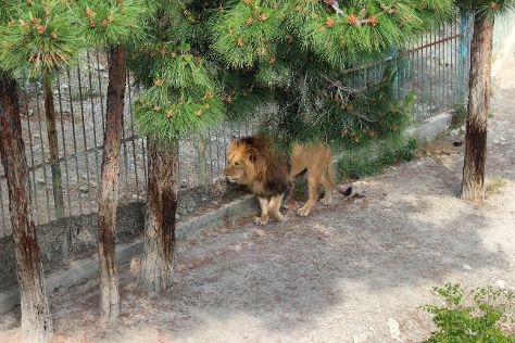 Safari Park, Gelendzhik, Russia