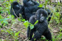 Wild Rwanda Safaris