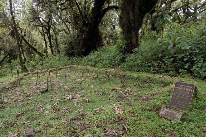 Karisoke Research Center - Dian Fossey Camp, Ruhengeri, Rwanda