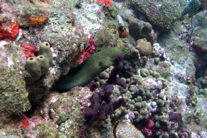 Shark Shoal, Saba