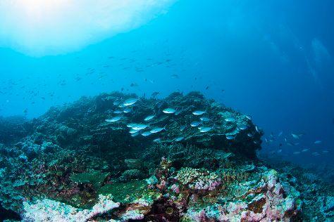 Cape Fatuosofia