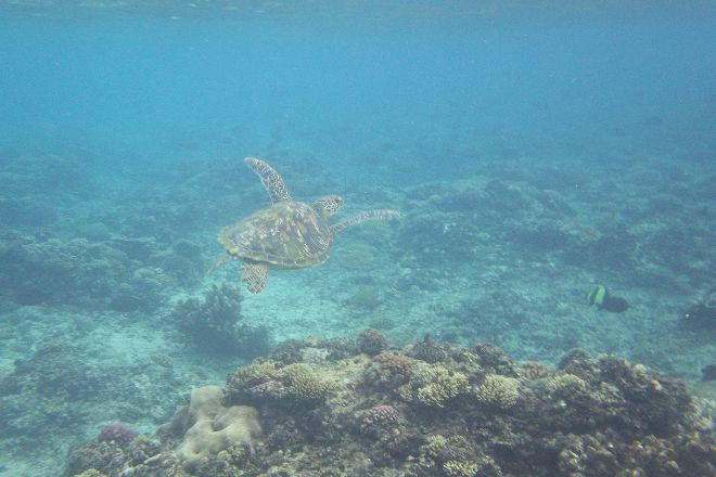 Swimming with Turtles, Savai'i, Samoa