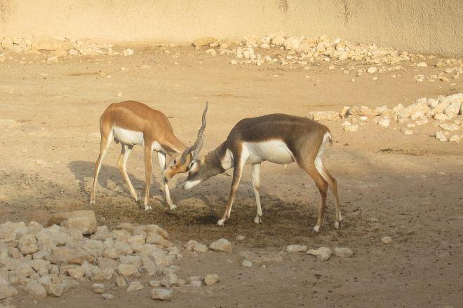 Riyadh Zoo, Riyadh, Saudi Arabia