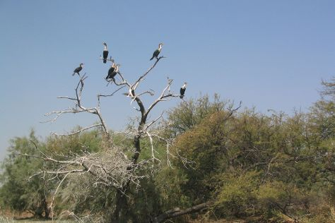 Djoudj National Bird Sanctuary, Saint-Louis, Senegal