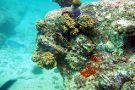 Diving Cruises Seychelles