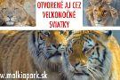 Malkia Park- Big Cats Rescue